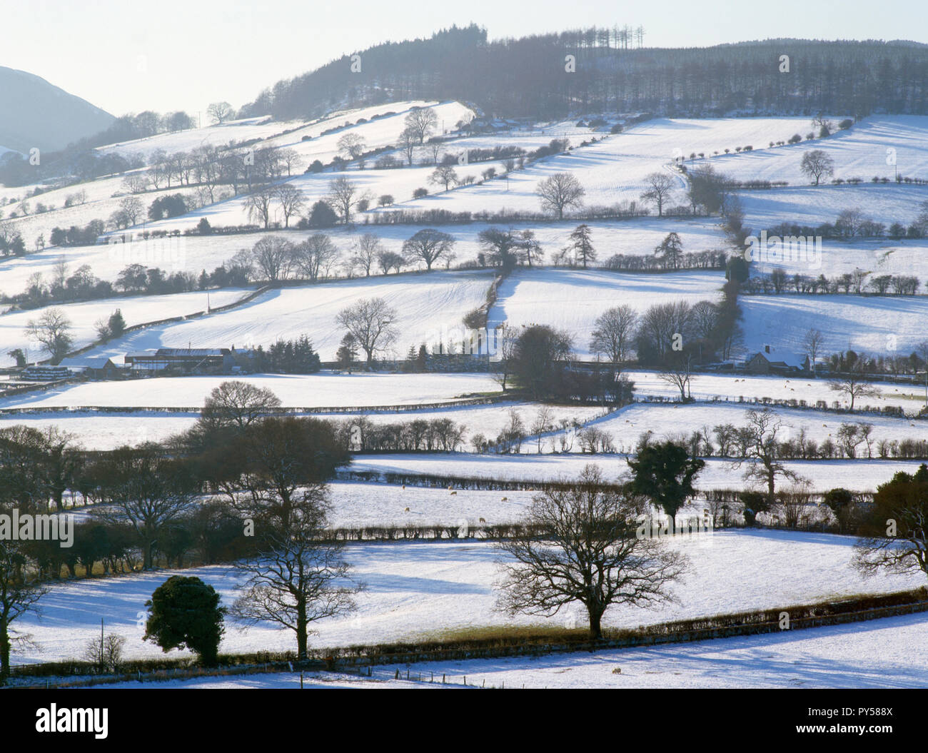 View SW from above the Loggerheads Country Park visitor centre, Denbighshire, Wales, UK, showing a patchwork of small fields with hedgerows & trees. - Stock Image