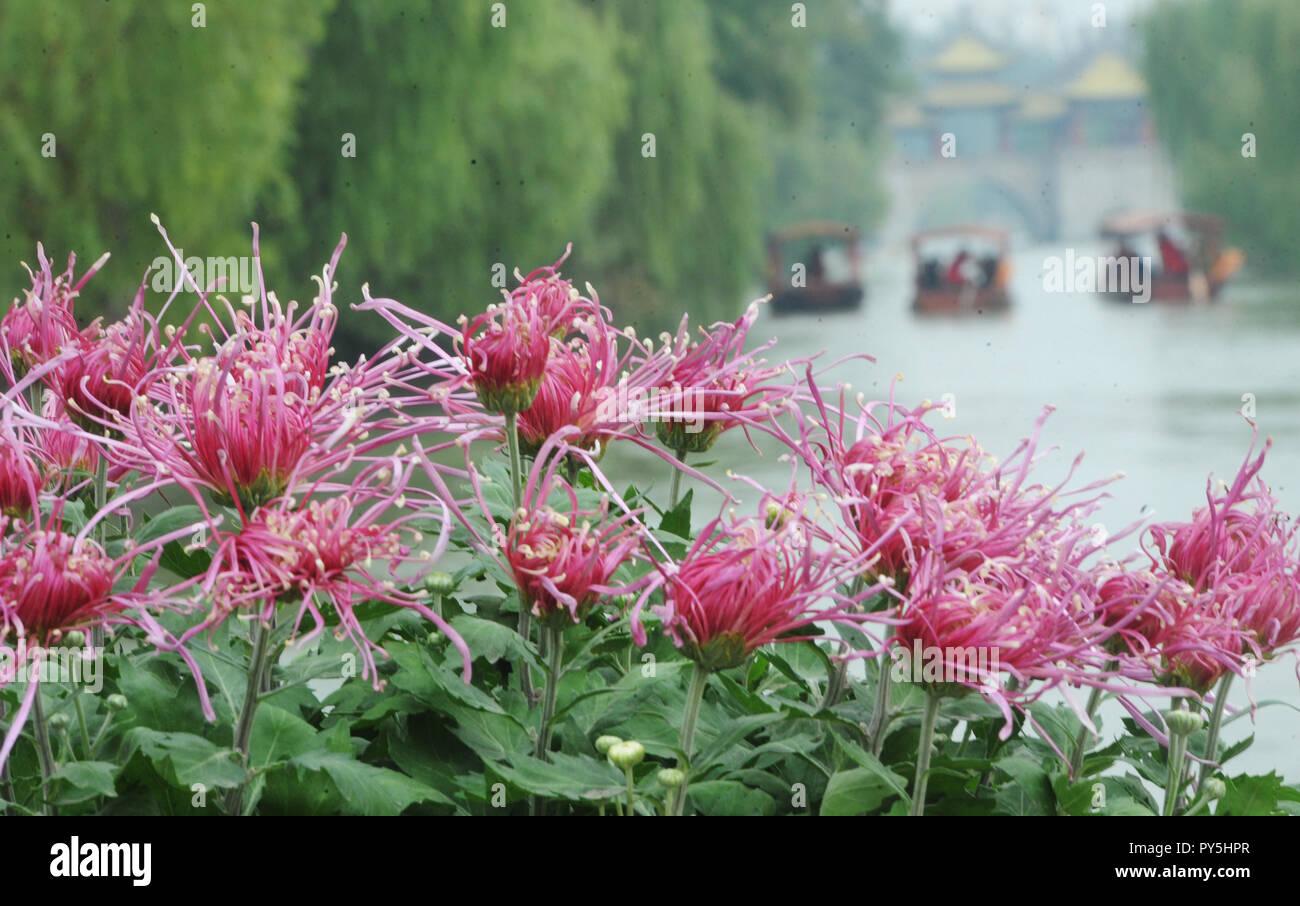Yangzhou, China's Jiangsu Province. 25th Oct, 2018. Tourists view chrysanthemum flowers at Slender West Lake scenic spot in Yangzhou, east China's Jiangsu Province, Oct. 25, 2018. A chrysanthemum fair kicked off here on Thursday. Credit: Pu Liangping/Xinhua/Alamy Live News Stock Photo