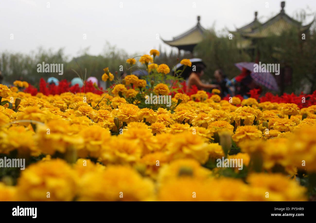 Yangzhou, China's Jiangsu Province. 25th Oct, 2018. Tourists view chrysanthemum flowers at Slender West Lake scenic spot in Yangzhou, east China's Jiangsu Province, Oct. 25, 2018. A chrysanthemum fair kicked off here on Thursday. Credit: Meng Delong/Xinhua/Alamy Live News Stock Photo