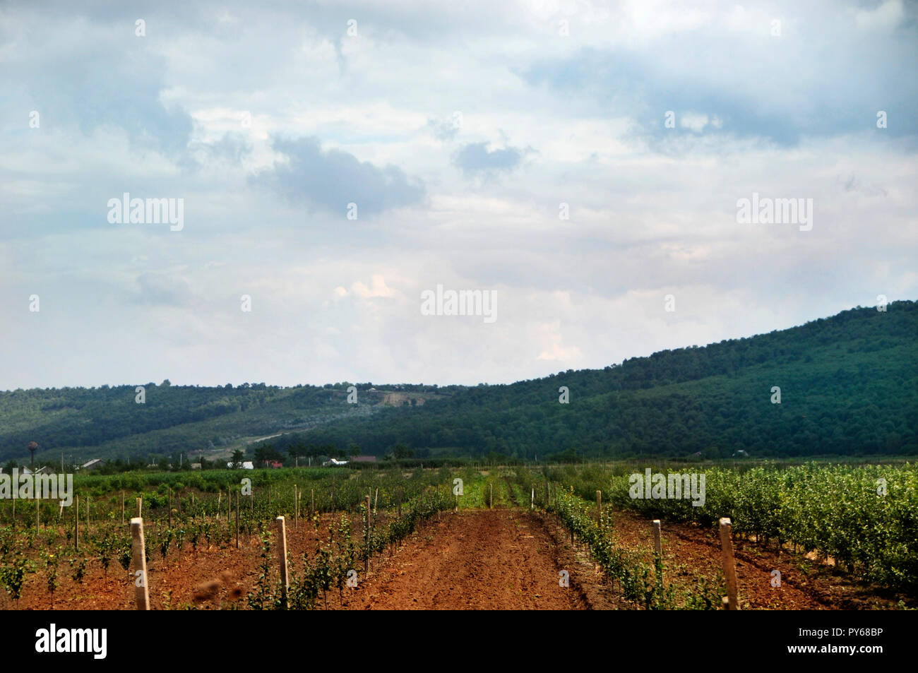 Eco vineyards located on a protected area in Moldova, Eastern Europe - Stock Image