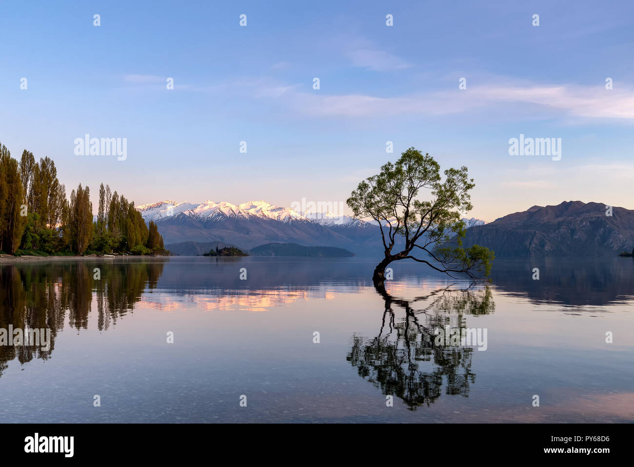 My Wanaka tree. A popular photo spot in Wanaka, New Zealand Stock Photo