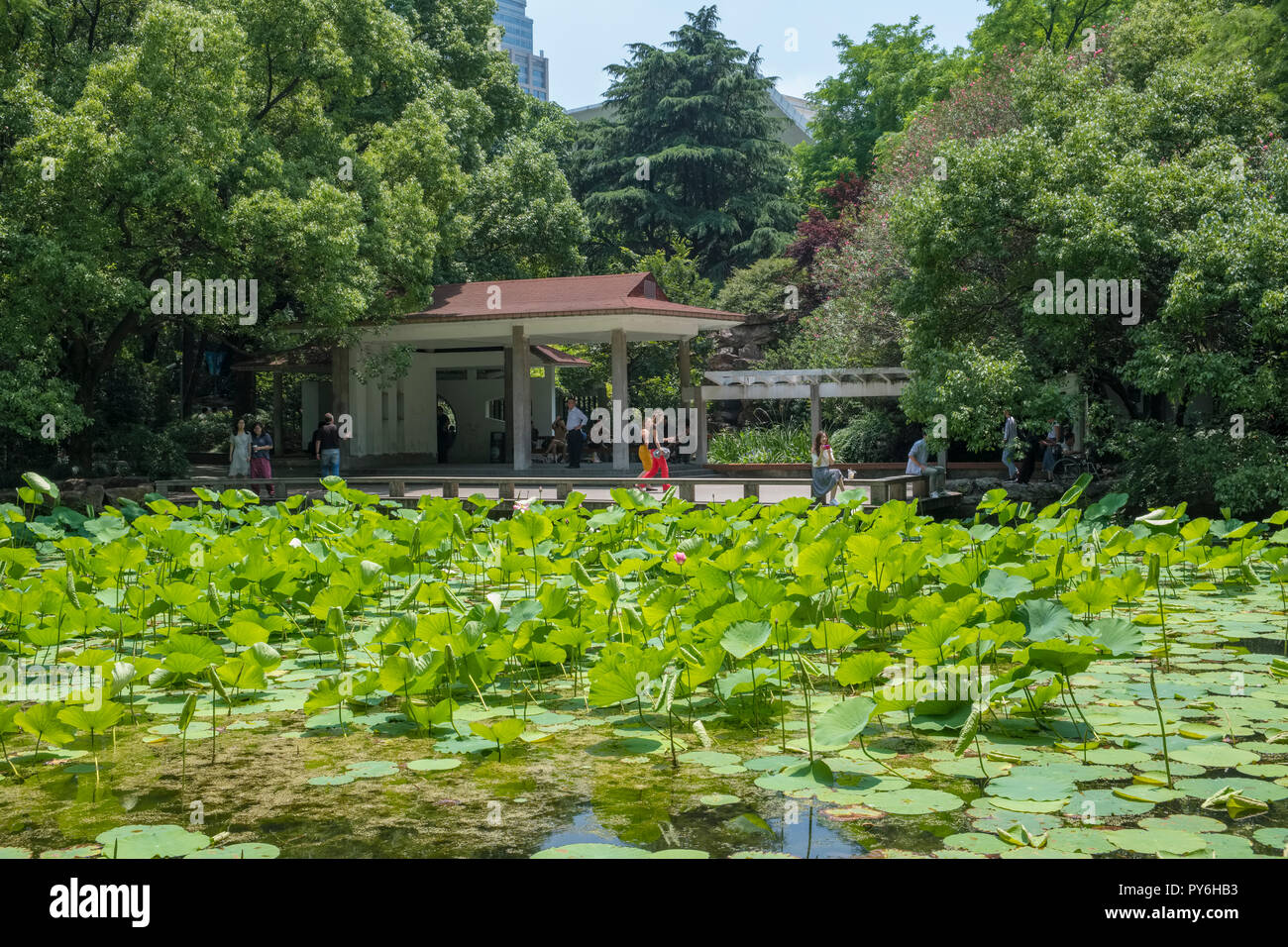 Tourists in the Peoples Park, Shanghai, China, Asia - Stock Image
