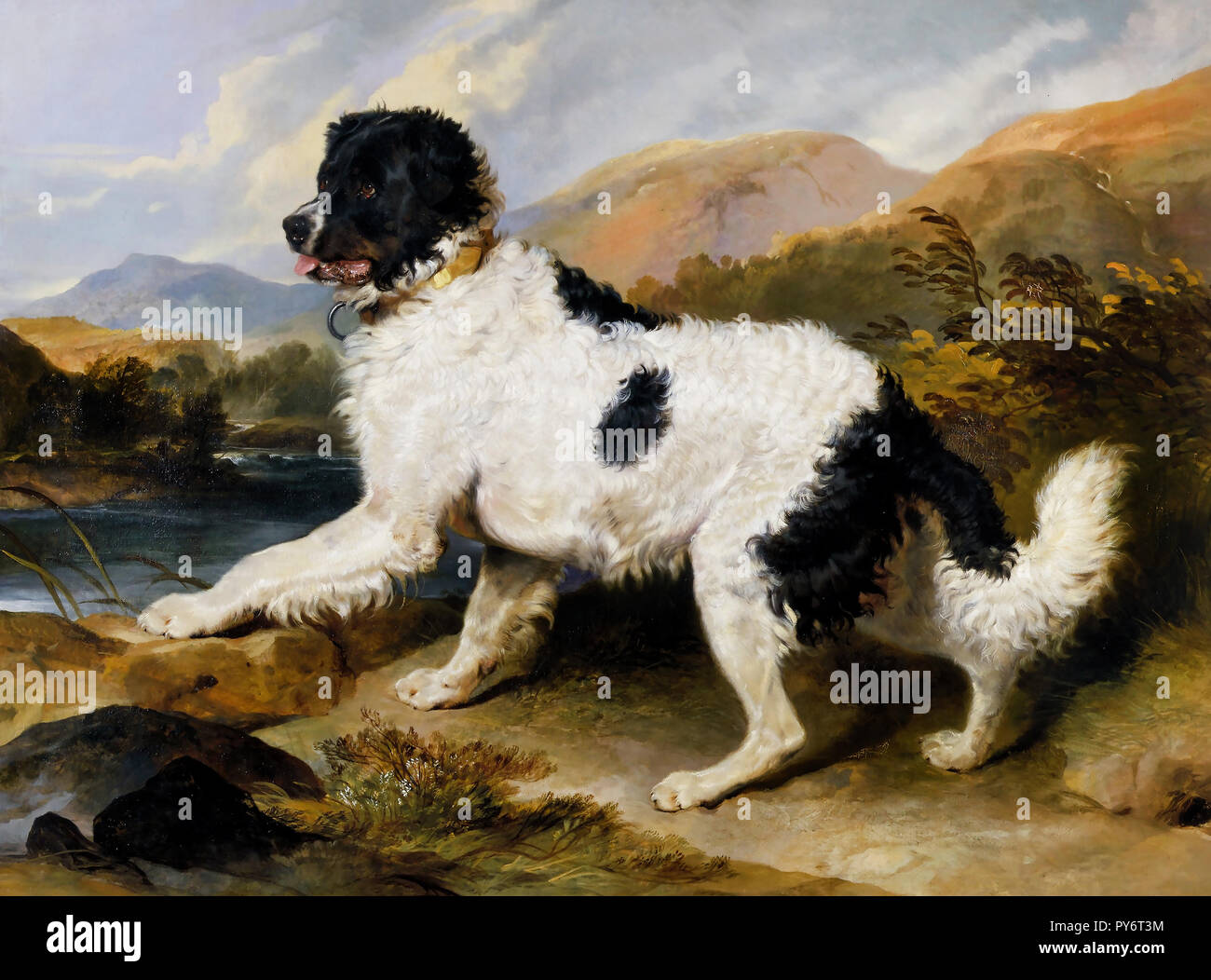 Edwin Henry Landseer, Lion: A Newfoundland Dog 1824 Oil on canvas, Victoria and Albert Museum, London, England. - Stock Image