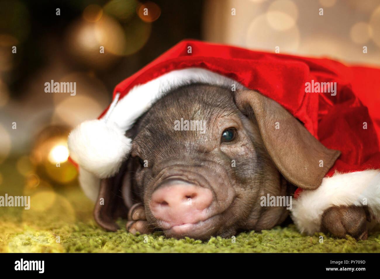 19 newborn christmas photography babies images newborn christmas ...