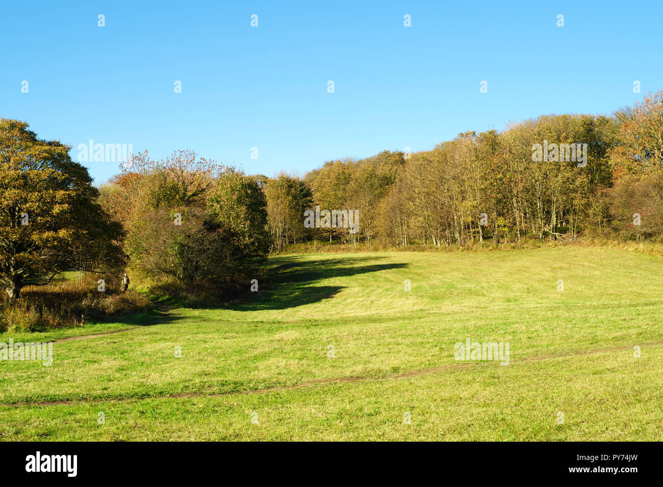 Hawthorn Dene Meadows, a Site of Special Scientific Interest, Hawthorn, Co. Durham, England, UK - Stock Image