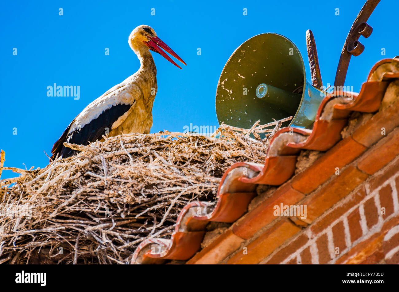 Stork nest next to the speakers in the town hall clock tower. Village of El Gordo, the town with the largest stork colony in Spain. El Gordo, Caceres, - Stock Image