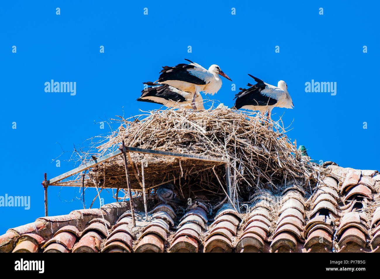 Nest of stork on a roof. Village of El Gordo, the town with the largest stork colony in Spain. El Gordo, Caceres, Extremadura, Spain, Europe - Stock Image