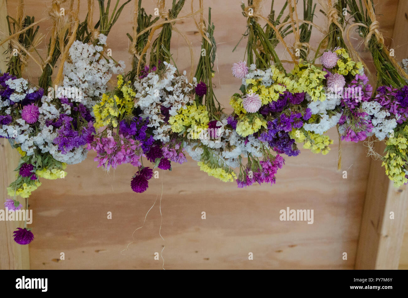 picked Flowers drying in shed, Maine, USA Stock Photo