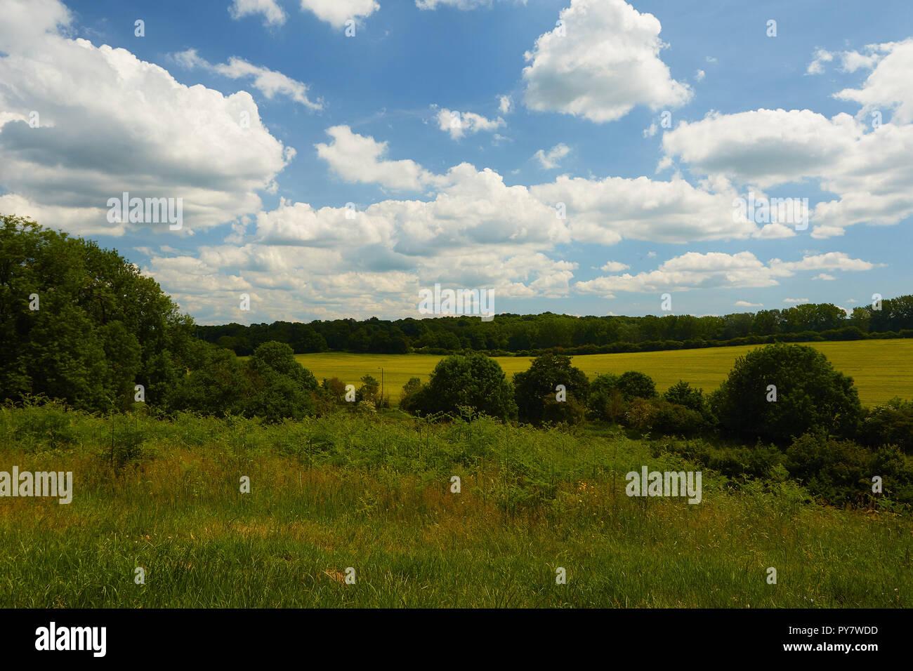 Verdant summer landscape, Croydon, England, United Kingdom, Europe Stock Photo