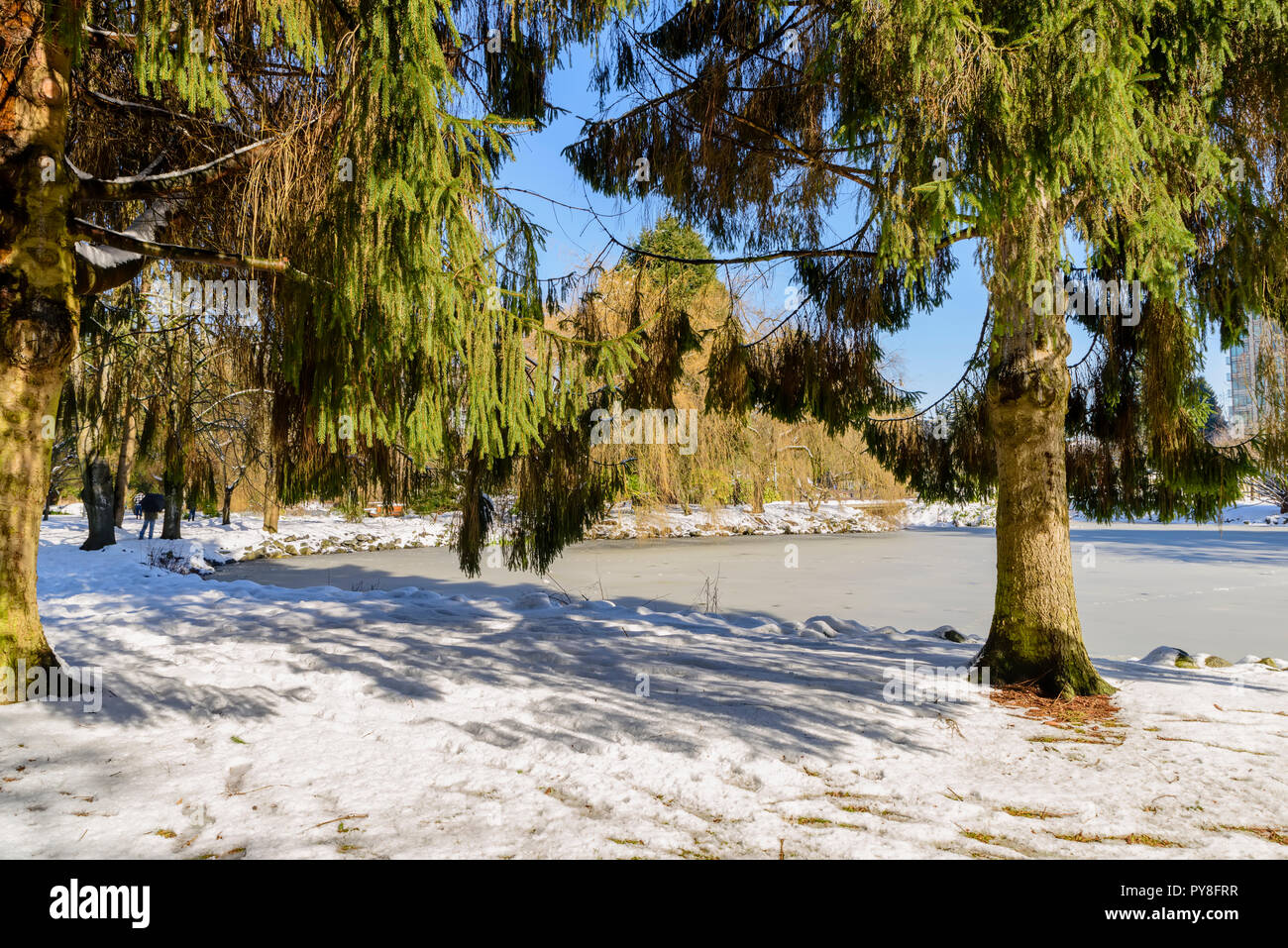 sunny winter day in a snow-covered city park with a lake of bound ice, green trees, people and a building, a blue sky not in the background Stock Photo