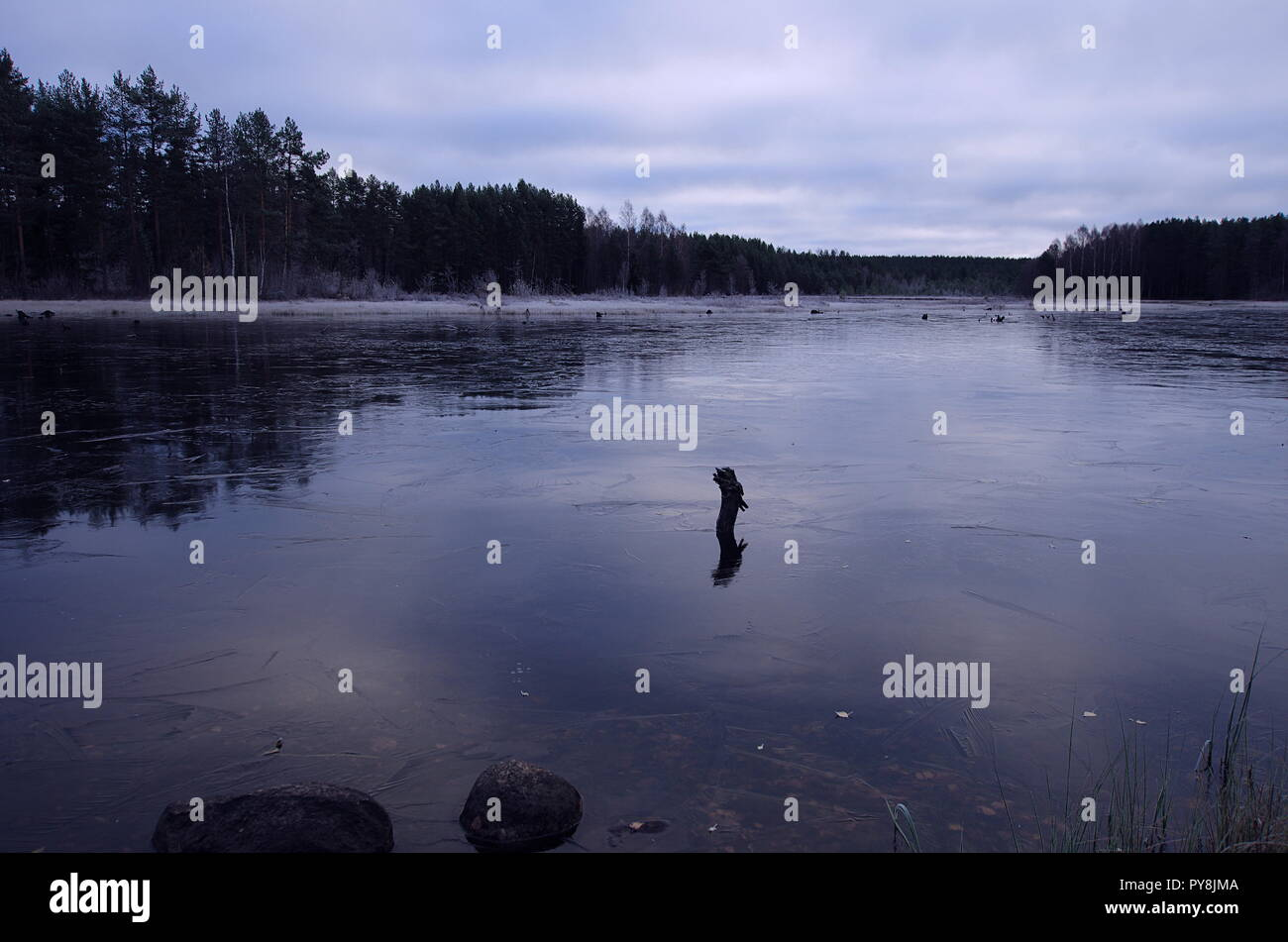 First thin layer of ice over a lake in Dalarna on a cold autumn morning. - Stock Image