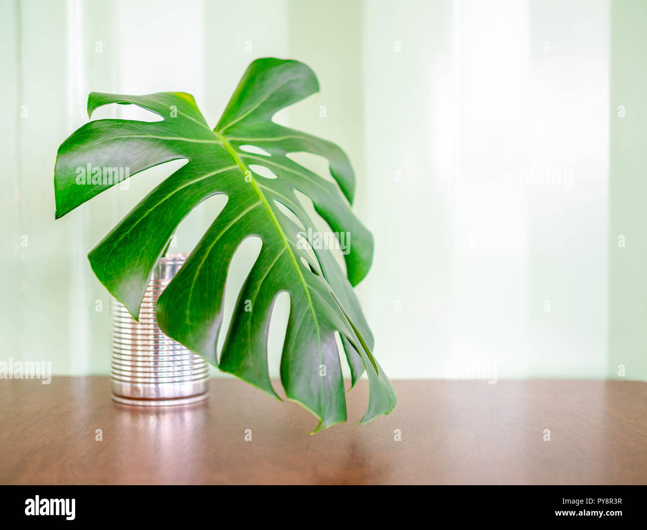 Green Tropical Palm Leaf In Tin Can On Wooden Table On Green