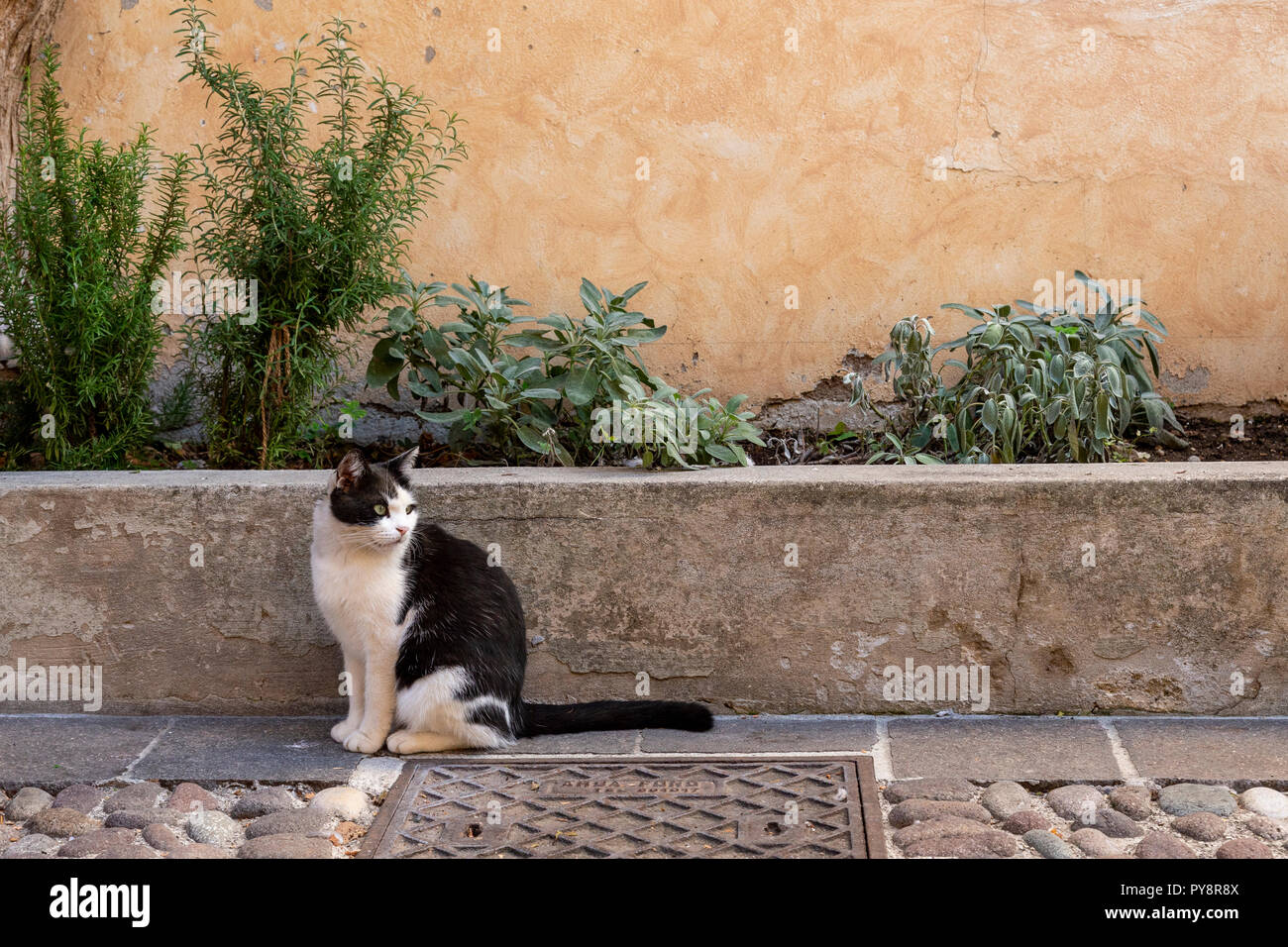 Cat on the pavement at Castellero Laguselo in northern Italy Stock Photo