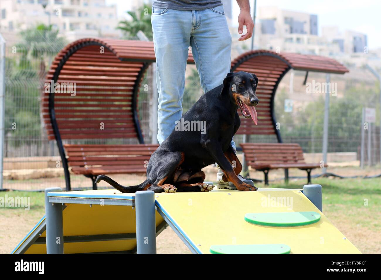 A dog plays in the facilities in the dog park - Stock Image
