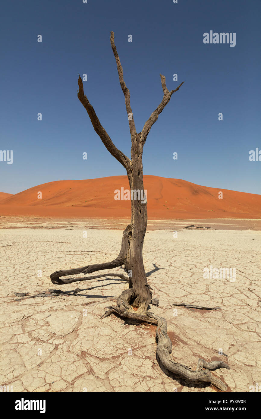 Deadvlei Namibia - trees dead for 8000 years in the dunes of the Namib Desert, Namib Naukluft National Park, Namibia Stock Photo