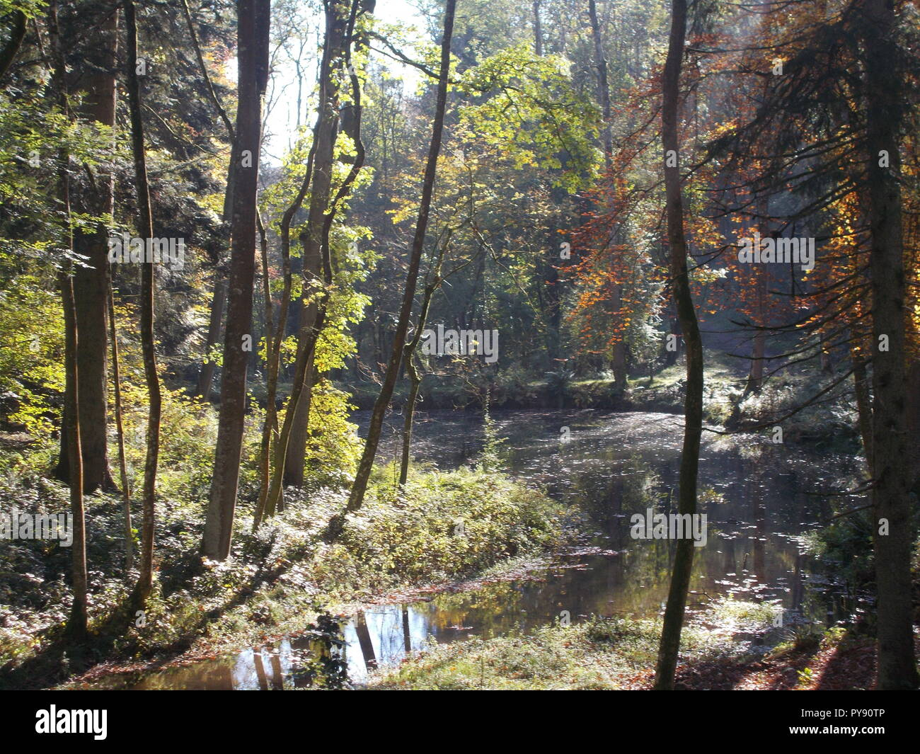 Autumn at Fish ponds Croft Castle October 2018 - Stock Image