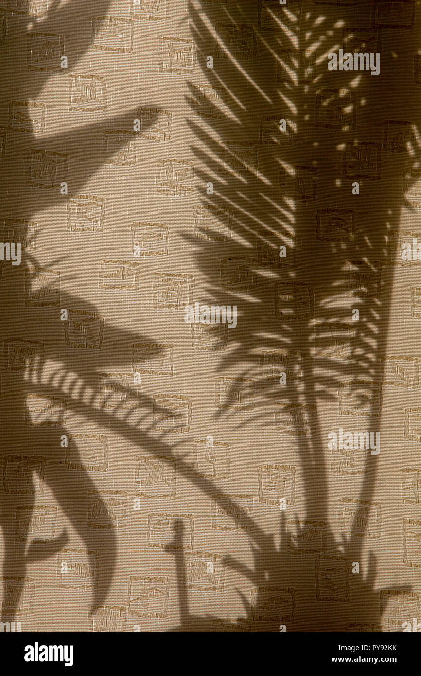 Curtains with silhouettes of houseplants. Abstract background. Shadow is dark area produced by object coming between rays of light and  surface. Stock Photo