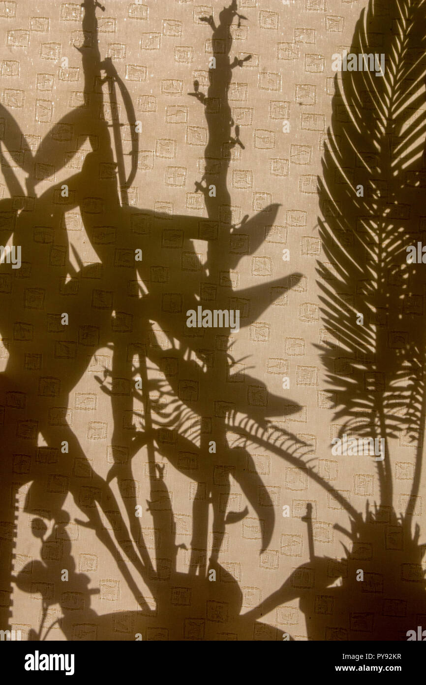 Curtains with silhouettes of houseplants. Abstract background. Shadow is dark area produced by object coming between rays of light and  surface. - Stock Image