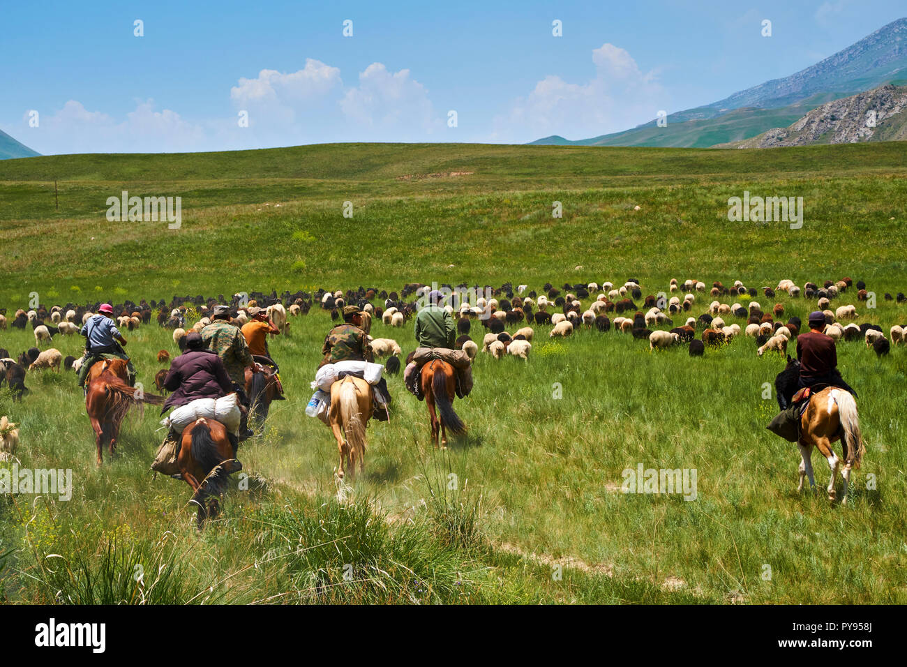 Kyrgyzstan, Naryn province, transhumance of Kirghiz nomadic people - Stock Image