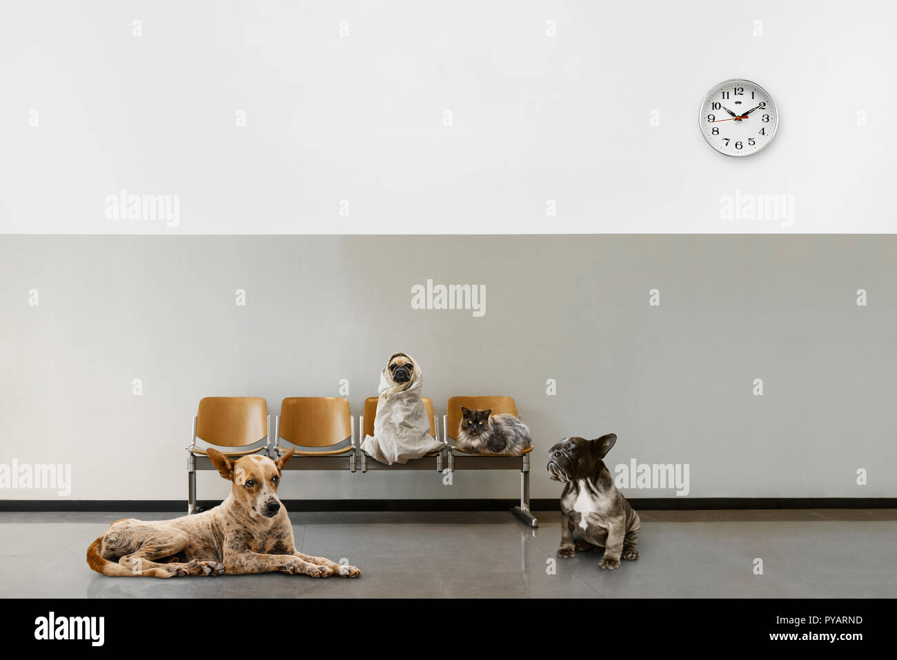 waiting room with chairs, clock and group of sitting animals - Stock Image
