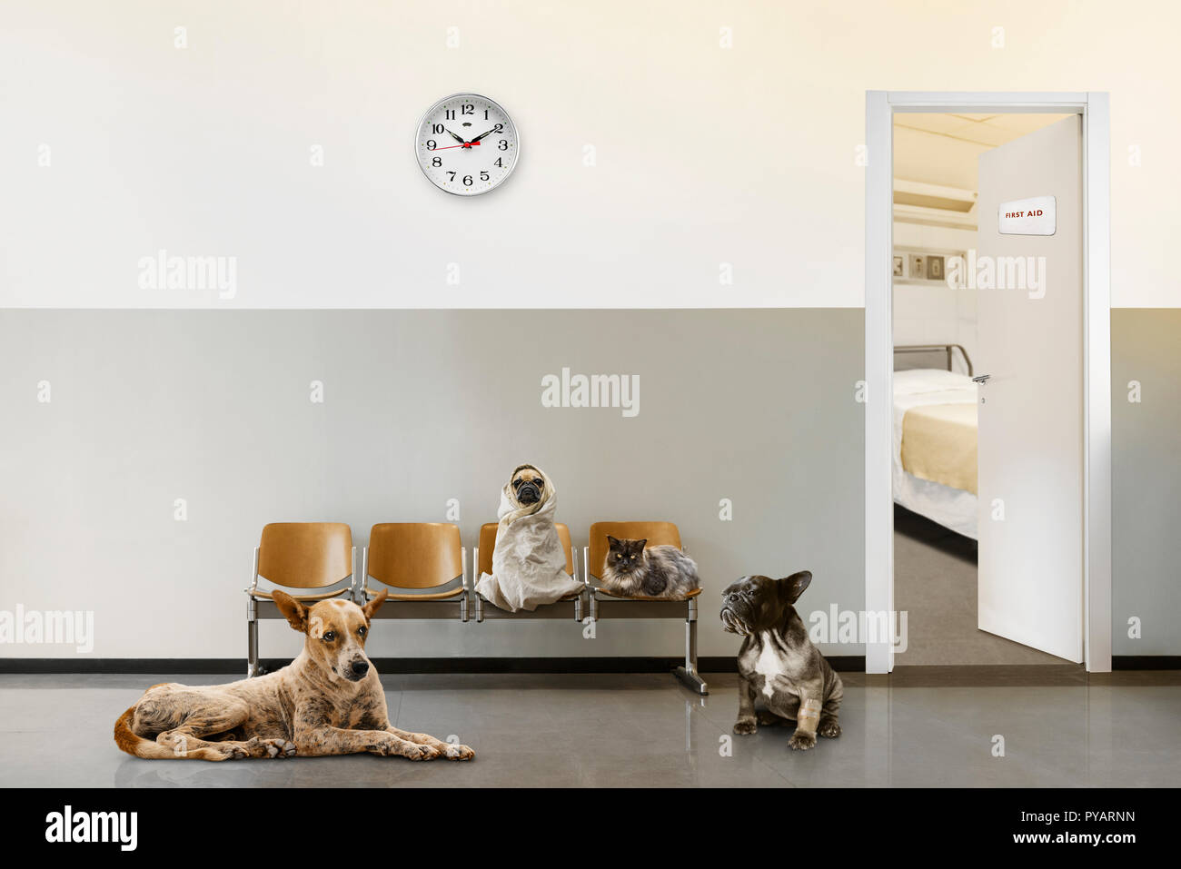 veterinary waiting room with chairs, clock, open door and group of sitting animals. - Stock Image