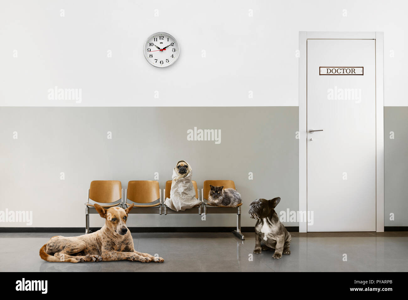 veterinary waiting room with chairs, clock, close door and group of sitting animals - Stock Image