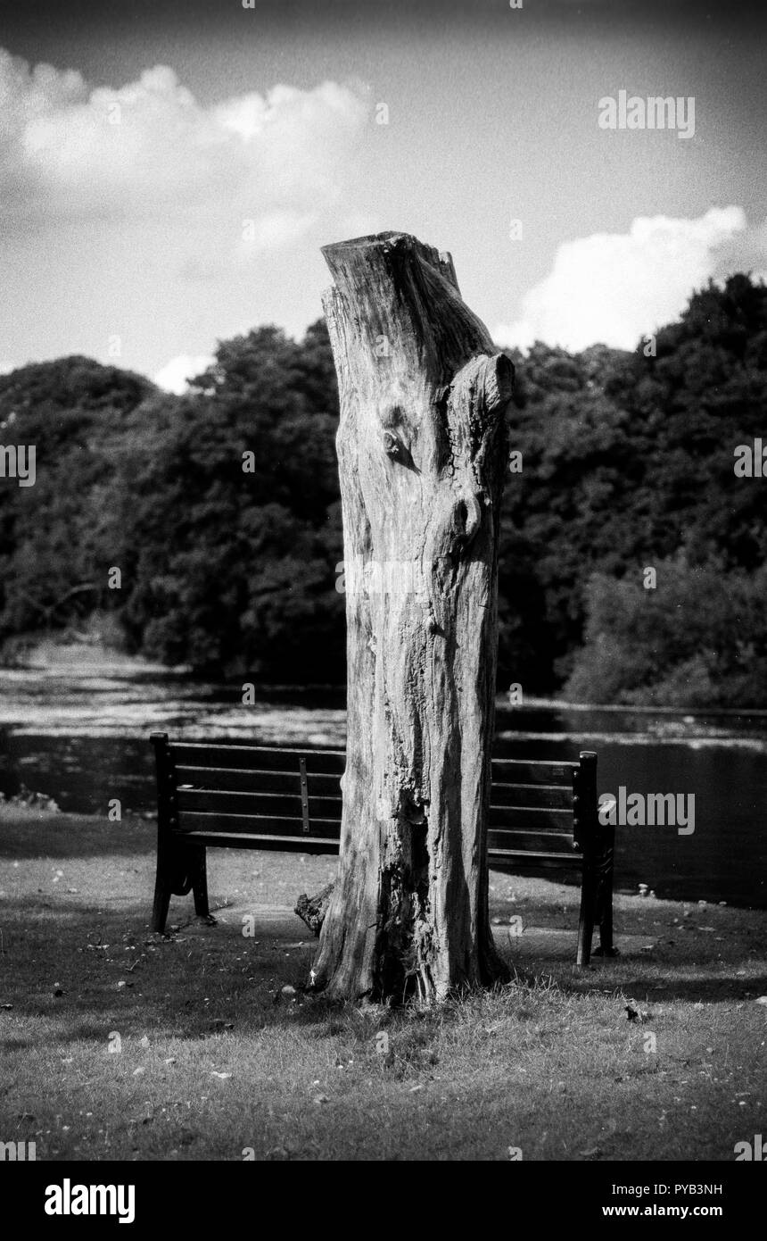 Maidenhead, United Kingdom.  General Views Raymill Island banks of the River Thames.  Tuesday. 01.08.2017.  © Peter SPURRIER,  Note. Nikon FM3a.  50mm - Stock Image