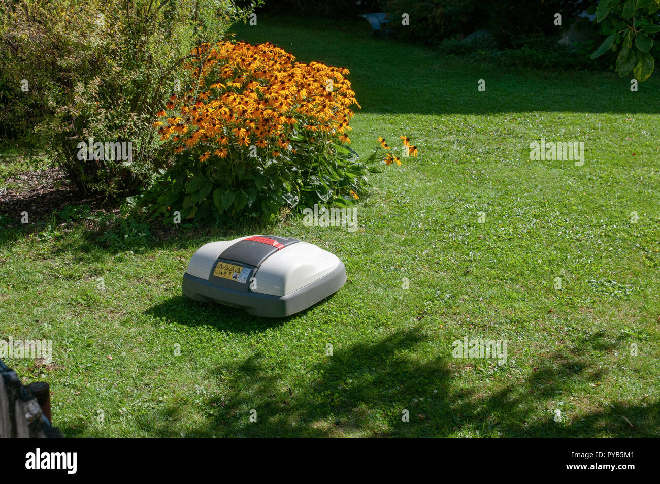 battery powered robotic lawn mower cutting grass Stock Photo