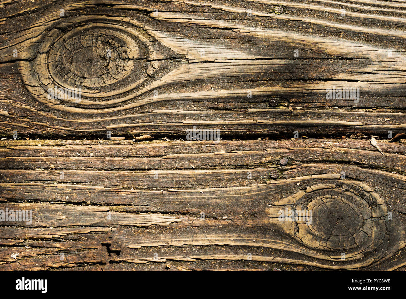 Two planks of a walkway, worn and rough, with large knots and nail heads exposed - Stock Image