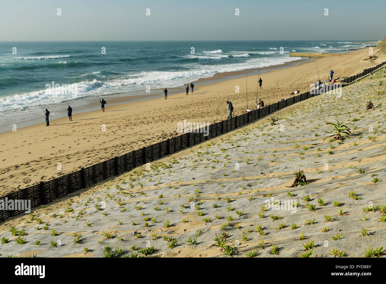 Durban, KwaZulu-Natal, South Africa, fence protecting new plants of dune rehabilitation project, ongoing beach management to counter global warming Stock Photo
