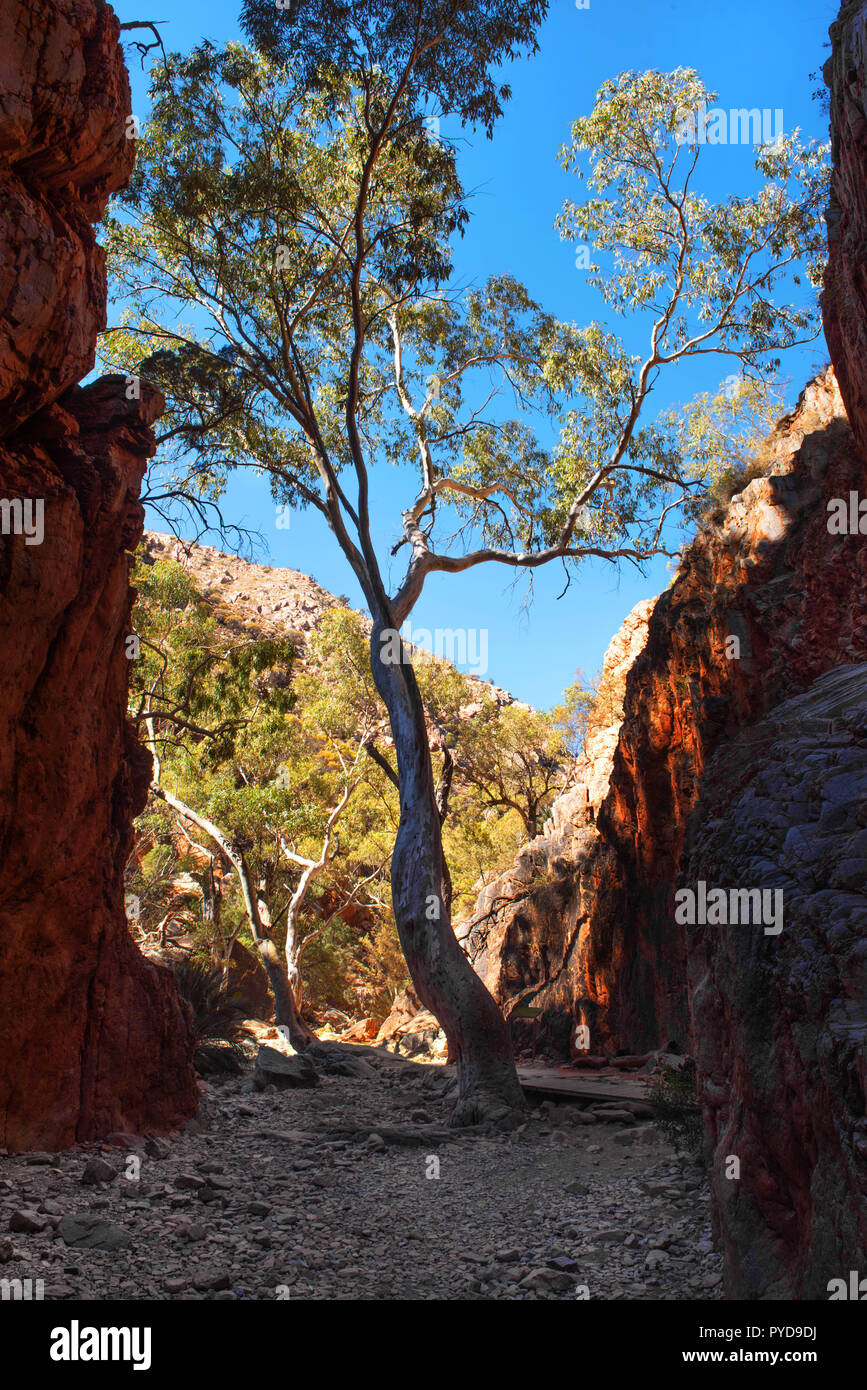 Standley Chasm, West MacDonnell Ranges National Park, Northern Territory, Australia - Stock Image