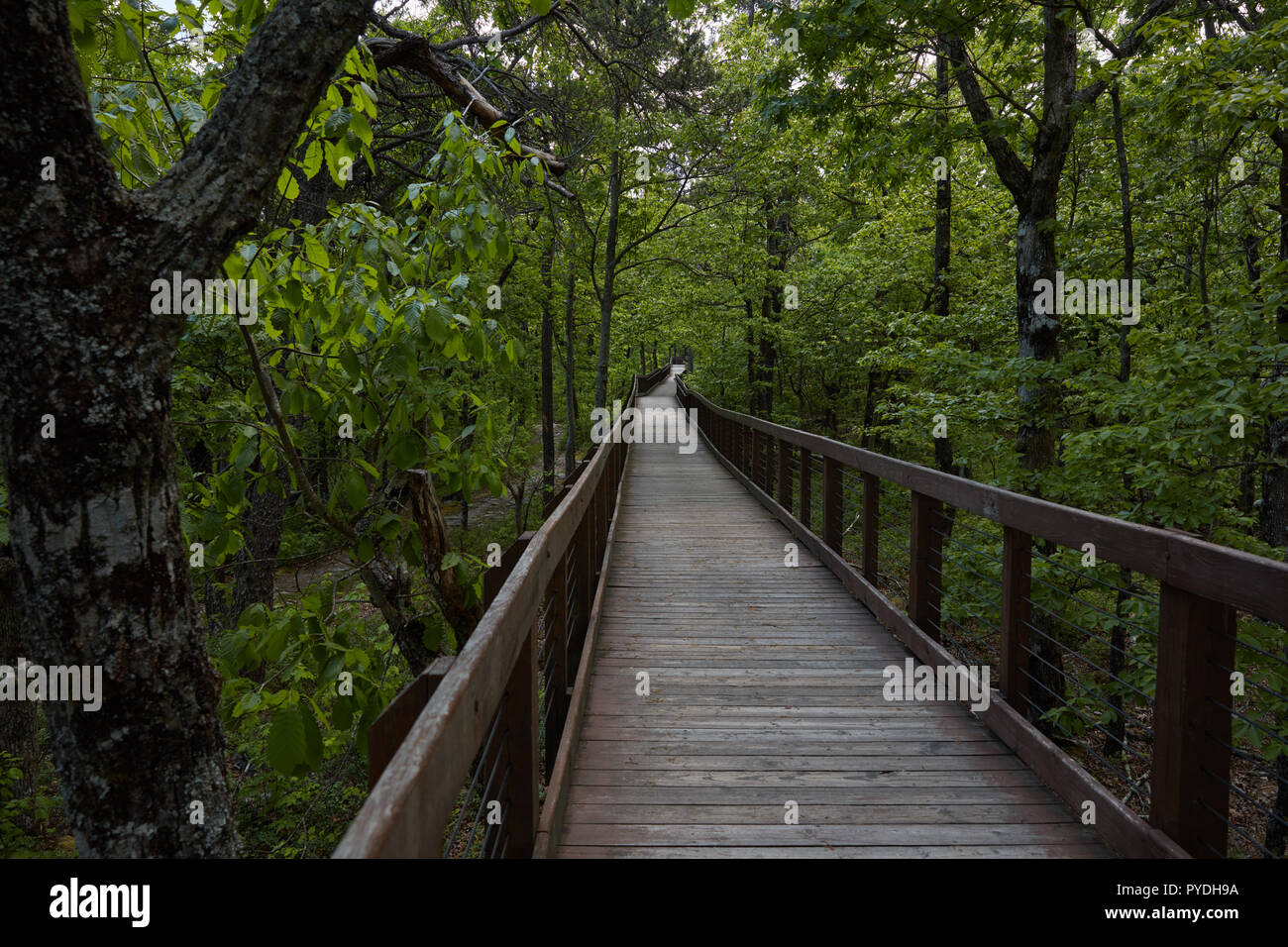 Doug Ghee trail in Cheaha State Park, Alabama - Stock Image
