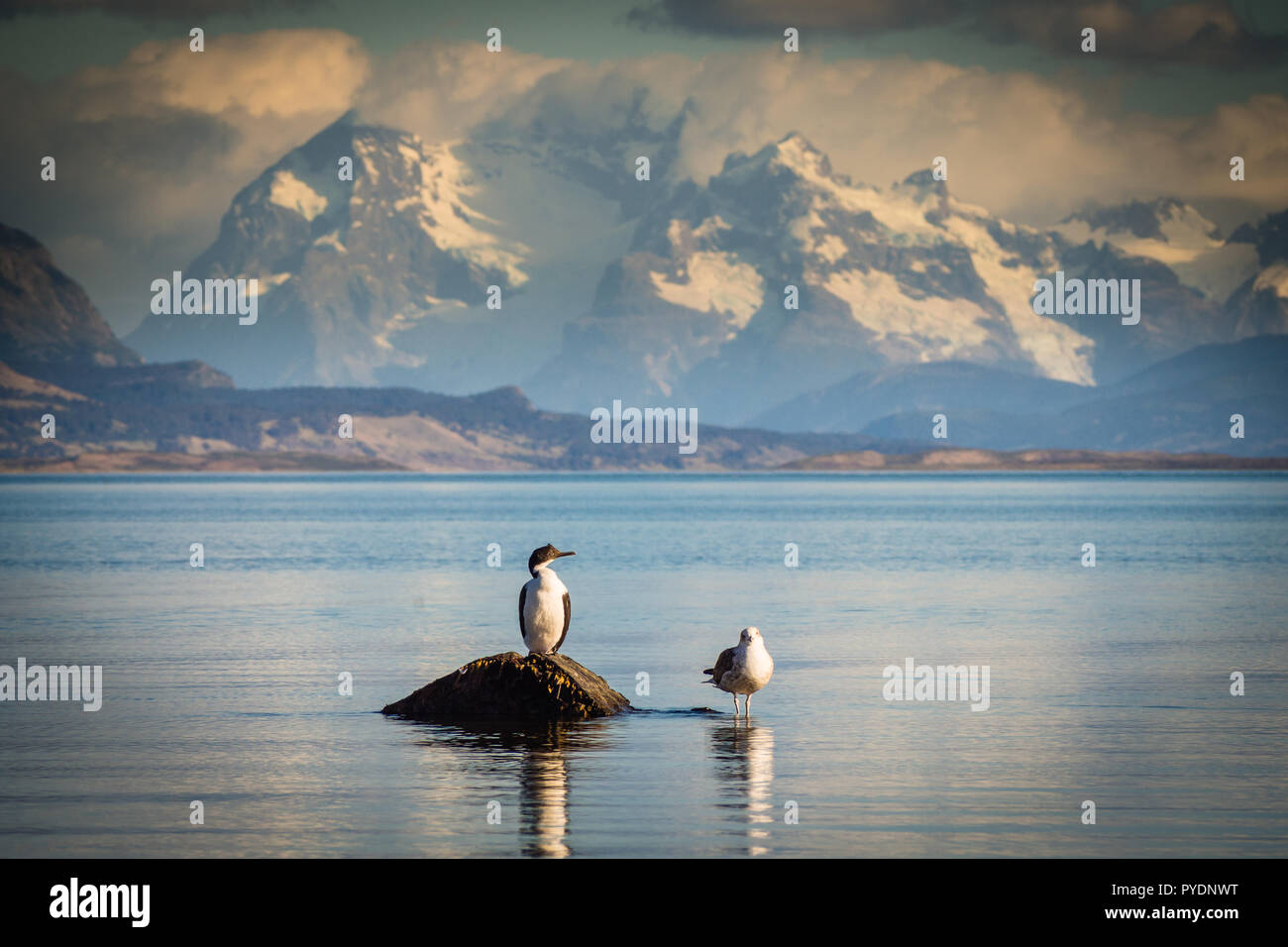 Two birds sitting on a rock by the sea. - Stock Image