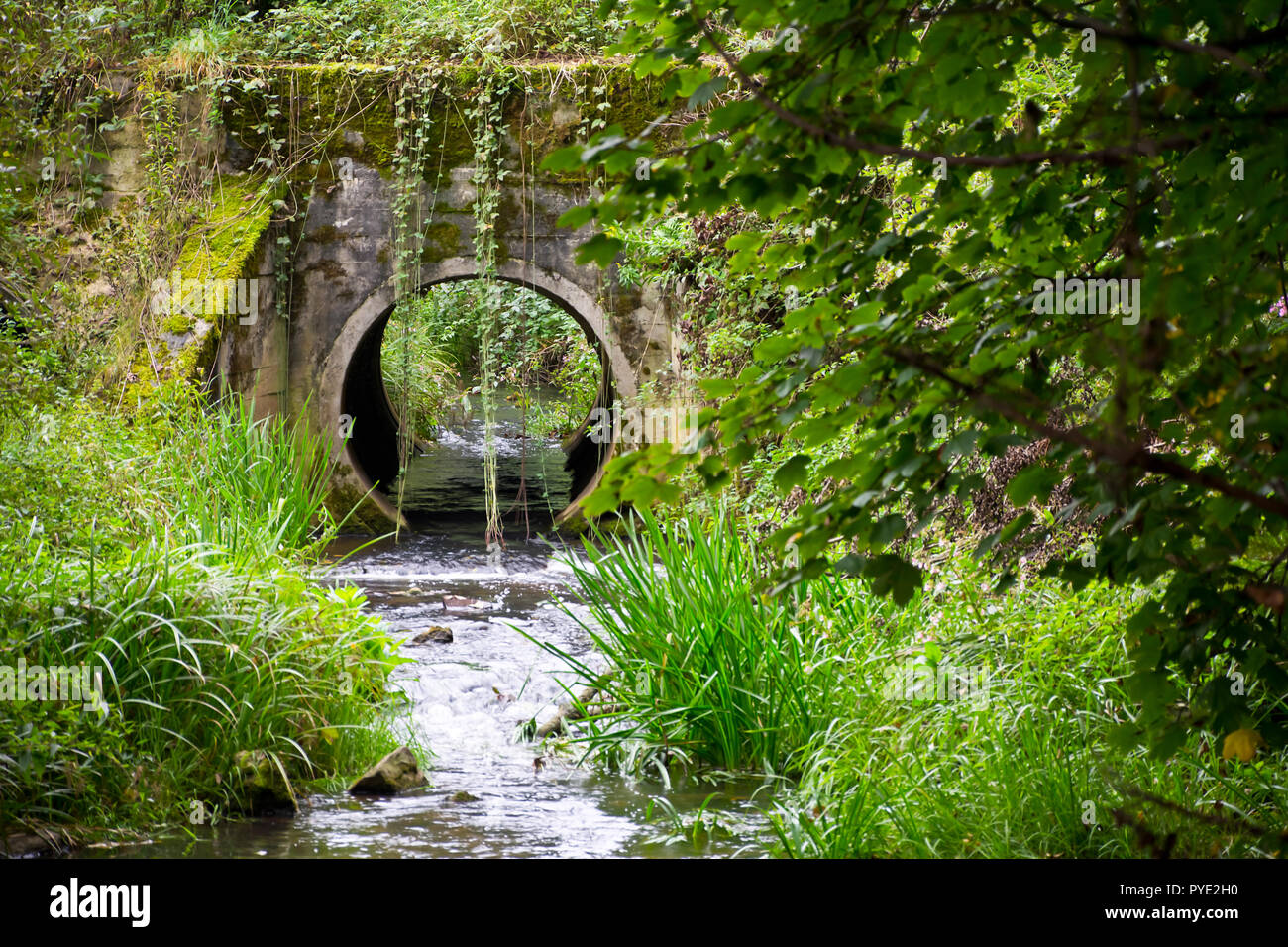 View of the stream and a road culvert at the edge of the forest. - Stock Image