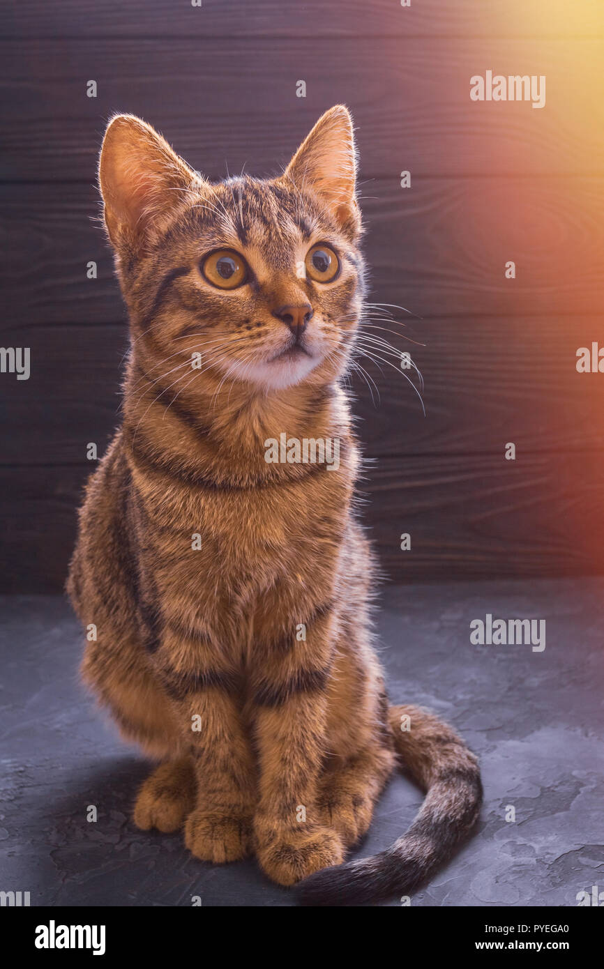 Beautiful young cat sitting on a table on a wooden background Stock Photo