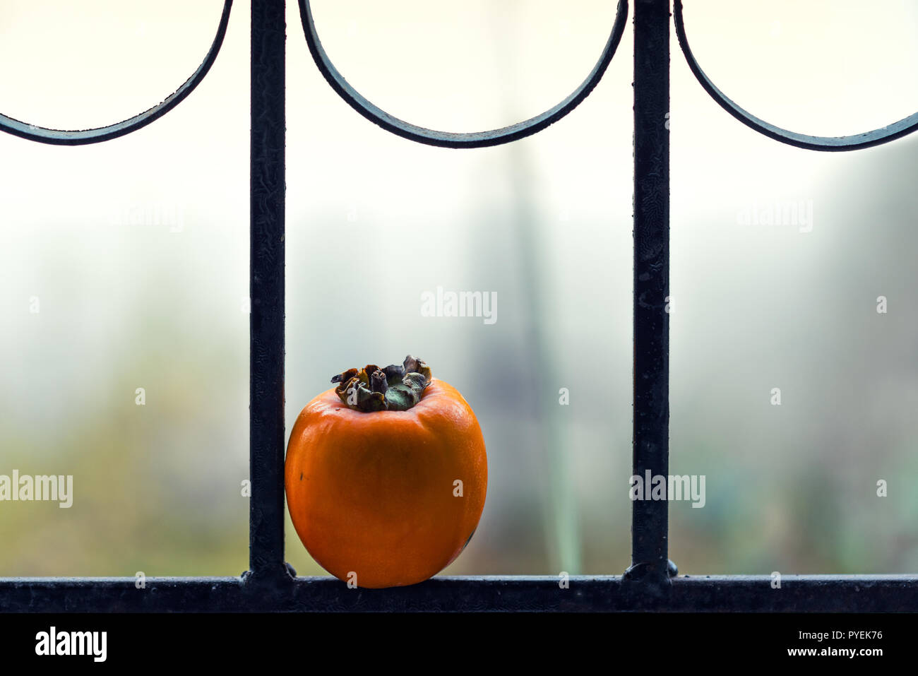 Ripe lonely persimmon fruit on the window - Stock Image