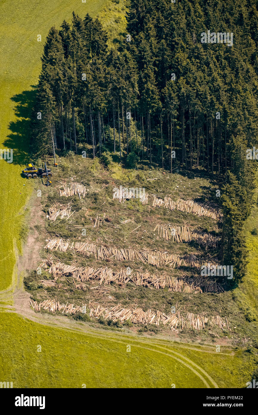 Aerial view, forestry work, woodfalls, trees fell Forestry on the way in front of the Holzborn, Meschede, Sauerland, North Rhine-Westphalia, Germany,  - Stock Image