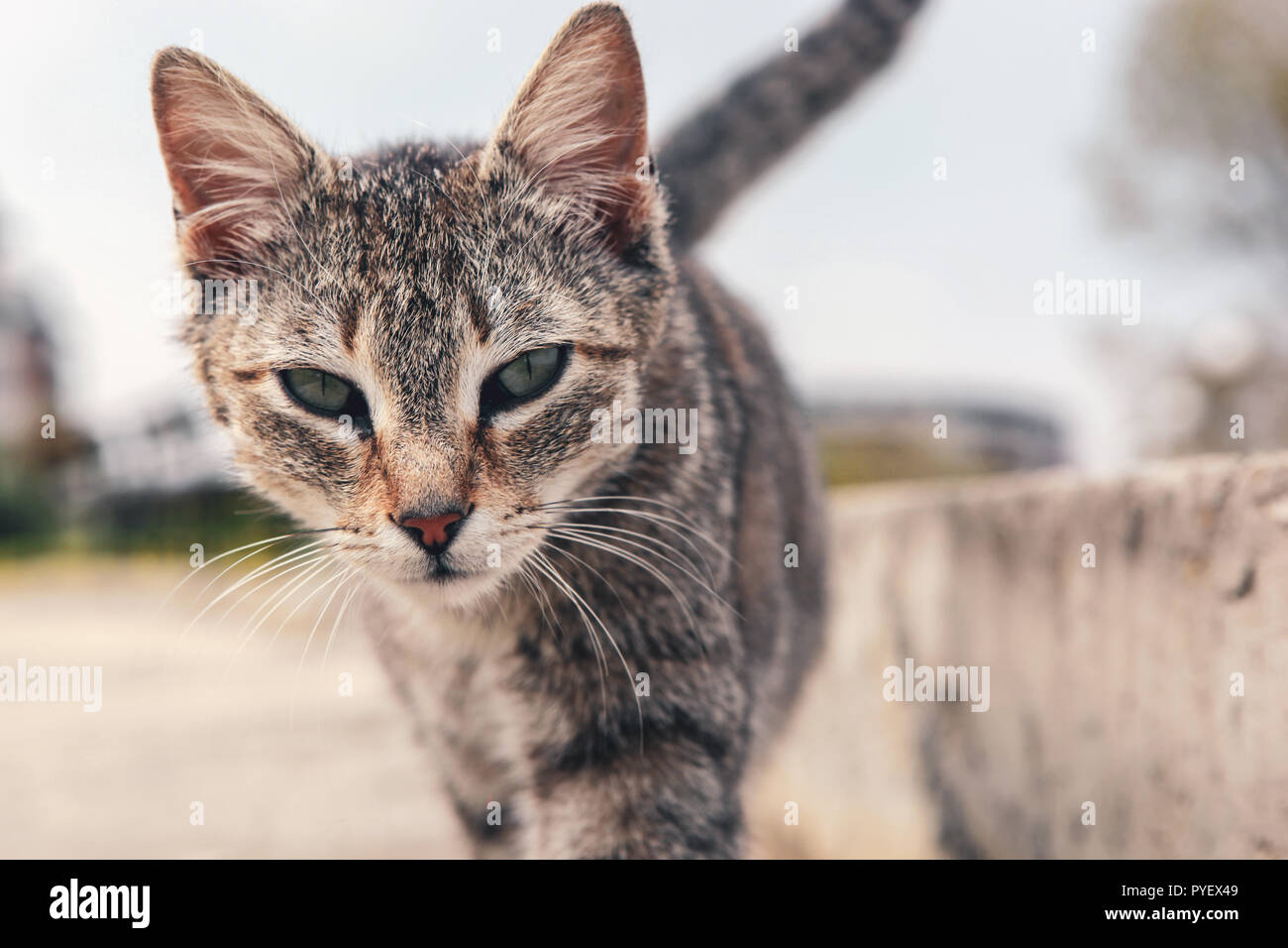 A beautiful cat on the street Stock Photo