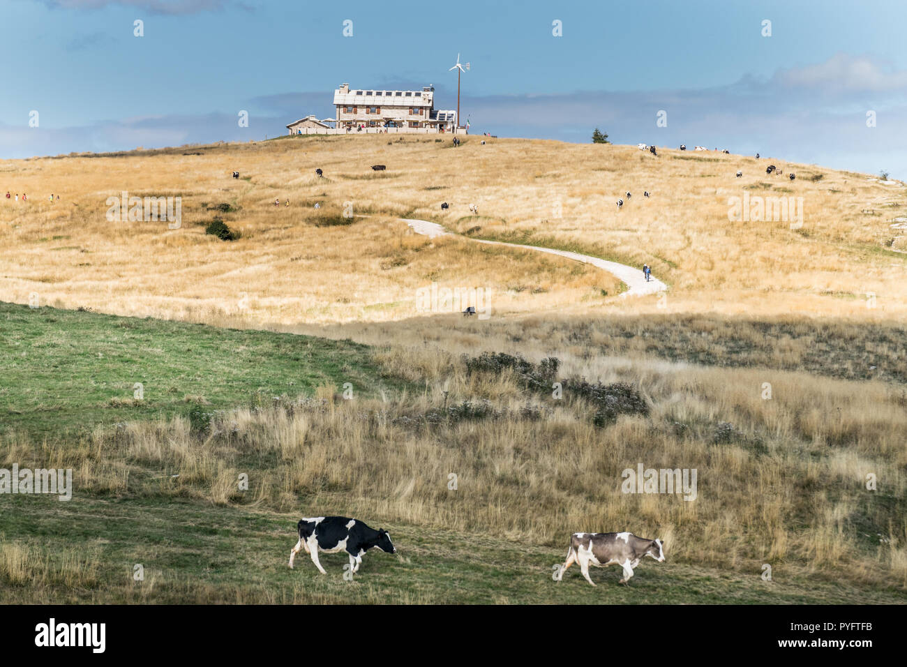 Panorama of an mountain retreat with grazing cows. - Stock Image