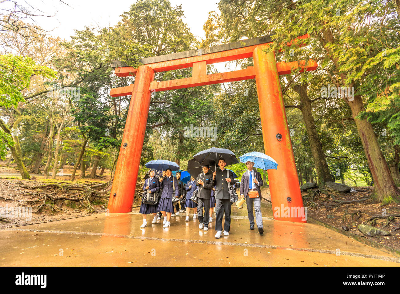 Nara, Japan - April 26, 2017: young teens in school uniforms walking with umbrellas through red Torii entrance of Kasuga Shrine. Kasuga Taisha is Nara's most celebrated shrine. - Stock Image