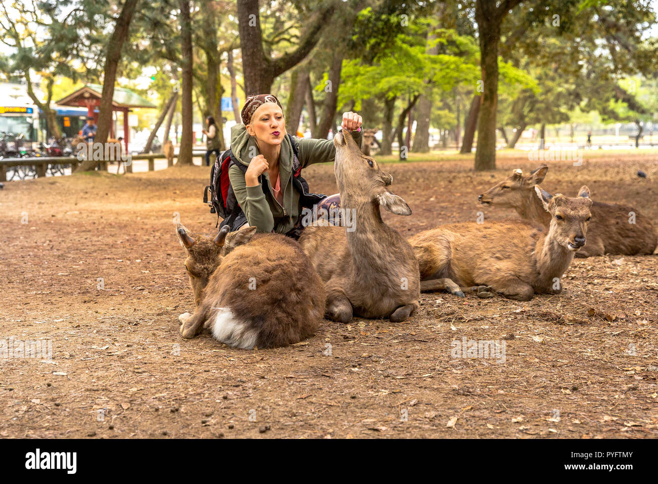 Happy tourist woman kissing popular deer in Nara town of Japan. Tourism in Japan concept and Unesco Heritage. - Stock Image