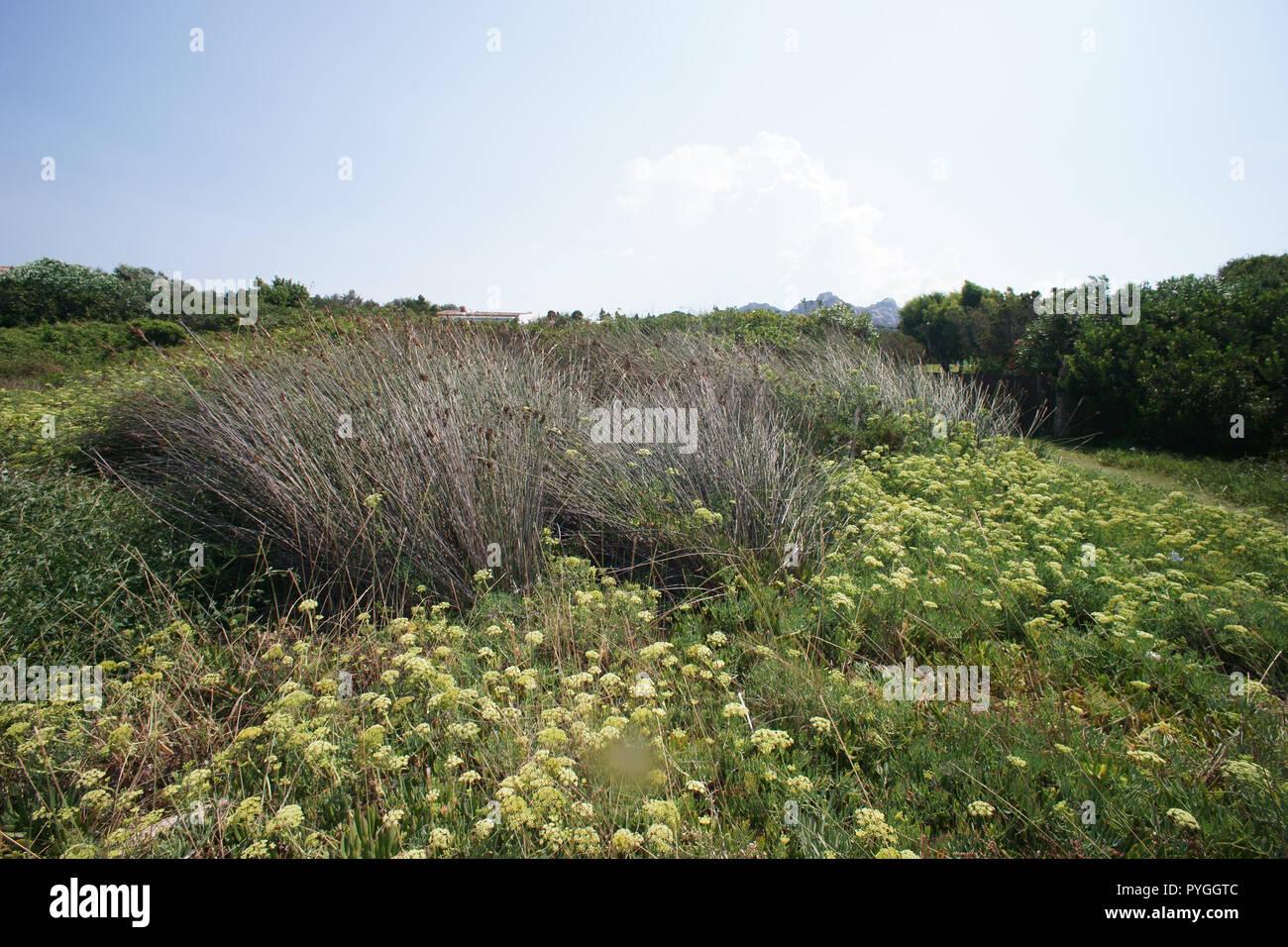 Back landscape of Liscia Vacca beach - Stock Image