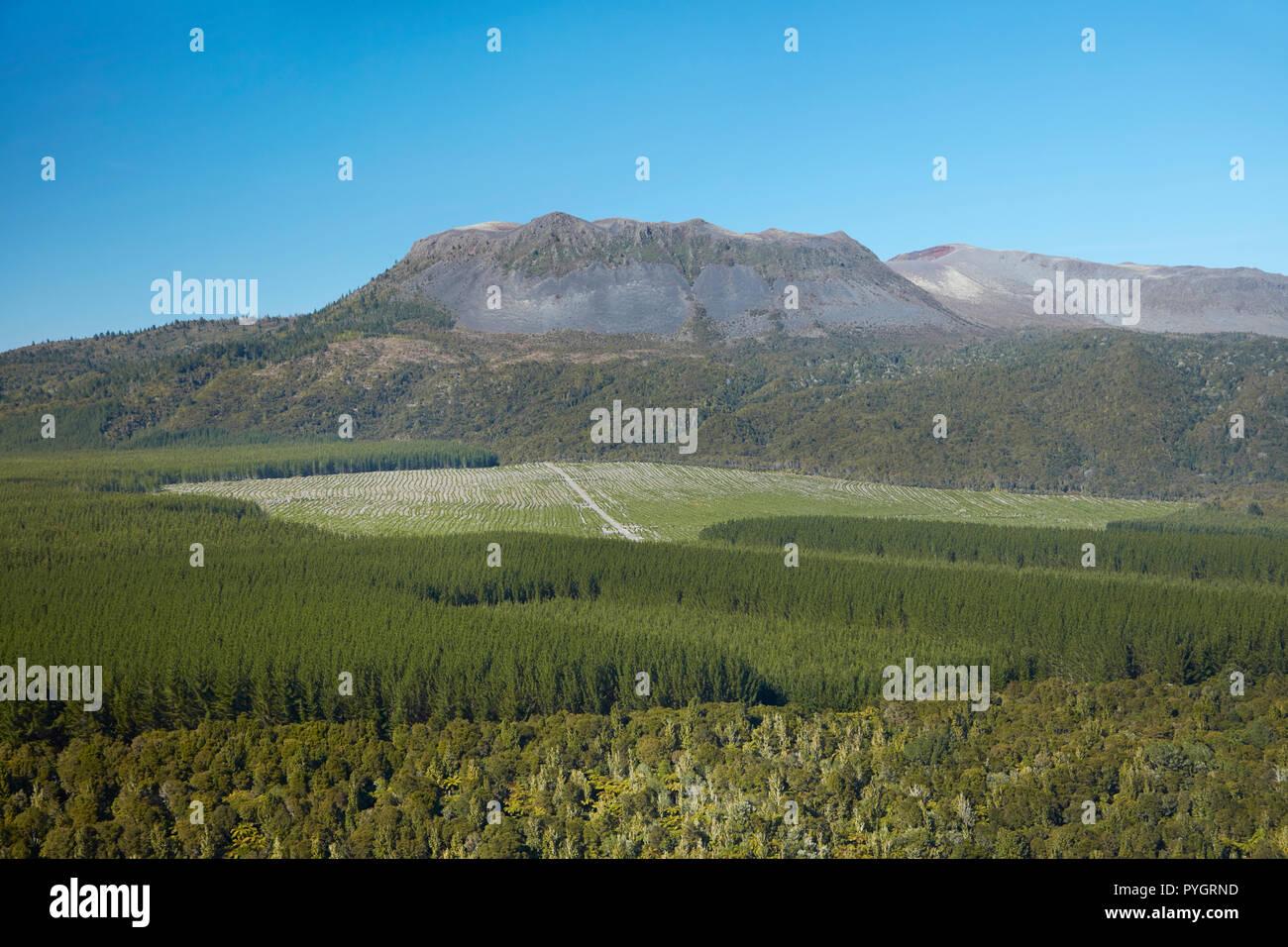 Mount Tarawera, and native and pine forests, near Rotorua, North Island, New Zealand - aerial - Stock Image