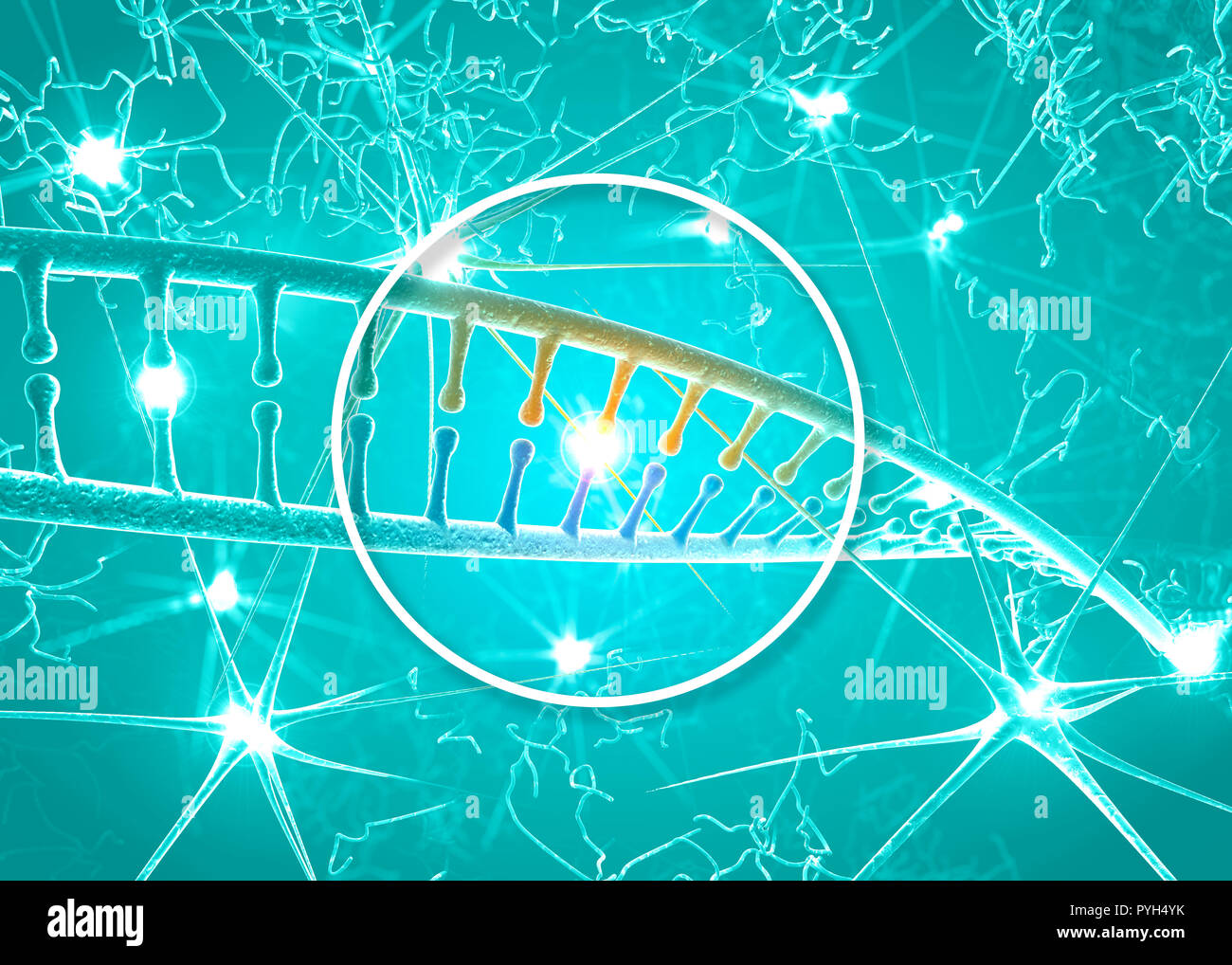 DNA and neurons, DNA restructuring, rewriting and continuous regeneration, increased activity of nerve cells, chromosomes and genetic material - Stock Image