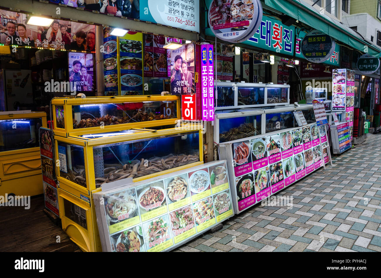 Tanks of fresh fish and seafood full of living fish and shellfish outside a restaurant in Haeundae, Busan in south Korea. - Stock Image