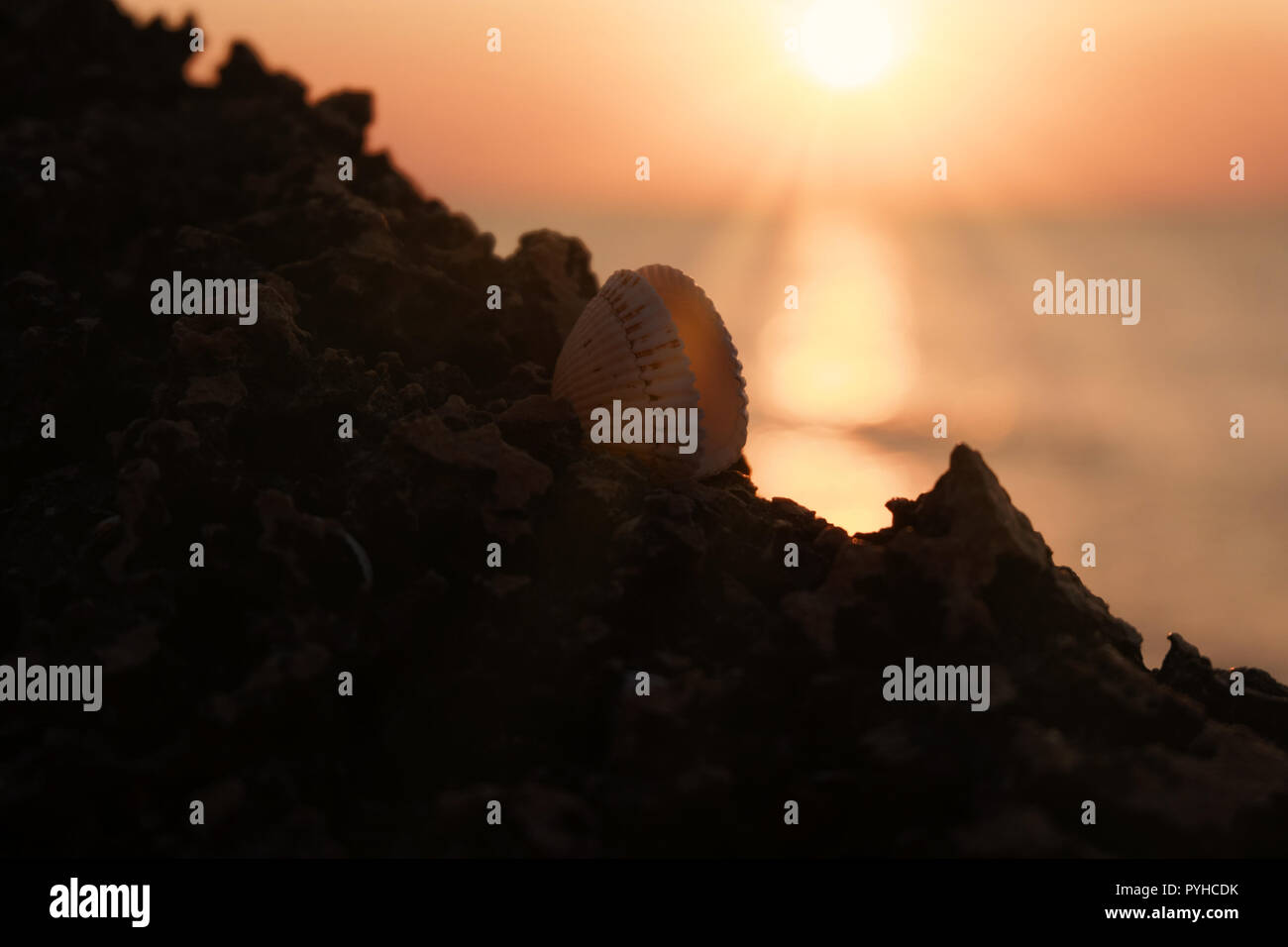 Sea shell with open valves on rock in front of sun setting over the sea - Stock Image