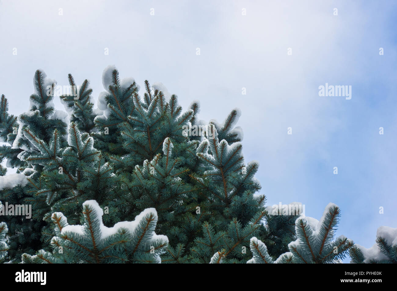 Green Fluffy Fir Tree Branch In The Snow Christmas Wallpaper Concept