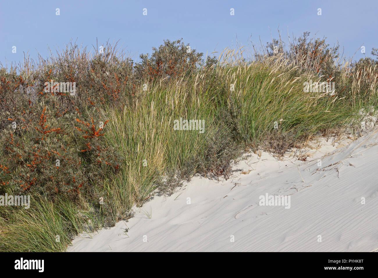 dunes on the Duene (Dune), Heligoland, Schleswig-Holstein, Germany - Stock Image
