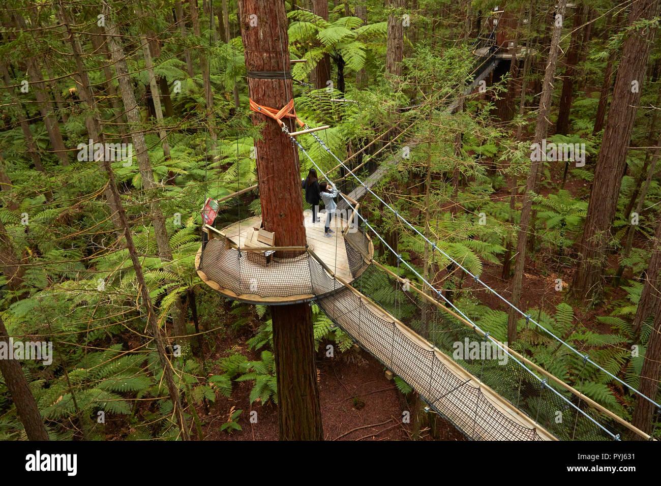Tourists on Redwoods Treewalk at The Redwoods (Whakarewarewa Forest), Rotorua, North Island, New Zealand - Stock Image
