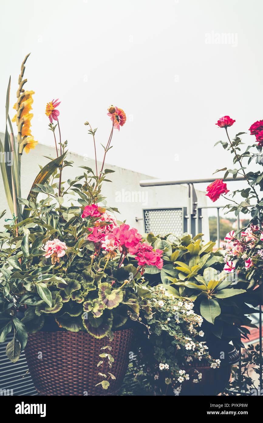 Autumn Balcony Garden Various Flowers Pots And Decorative Plants